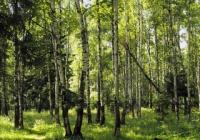 Поможет ли закон о неприкосновенных зеленых поясах бороться с несанкционированными рубками?