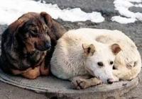 За выброшенное на улицу животное планируют штрафовать его владельца