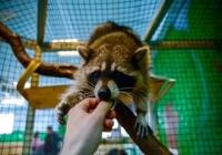 Госдума анонсировала принятие закона о запрете контактных зоопарков