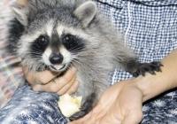 Стало известно, каких животных могут запретить держать в квартирах