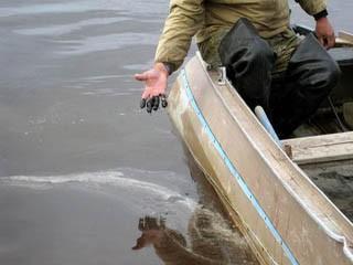 В Коми вновь появится Министерство природных ресурсов
