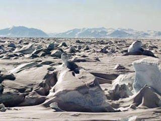 Арктика на краю перемен