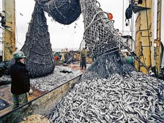 До 2050 года в Мировом океане исчезнет рыба