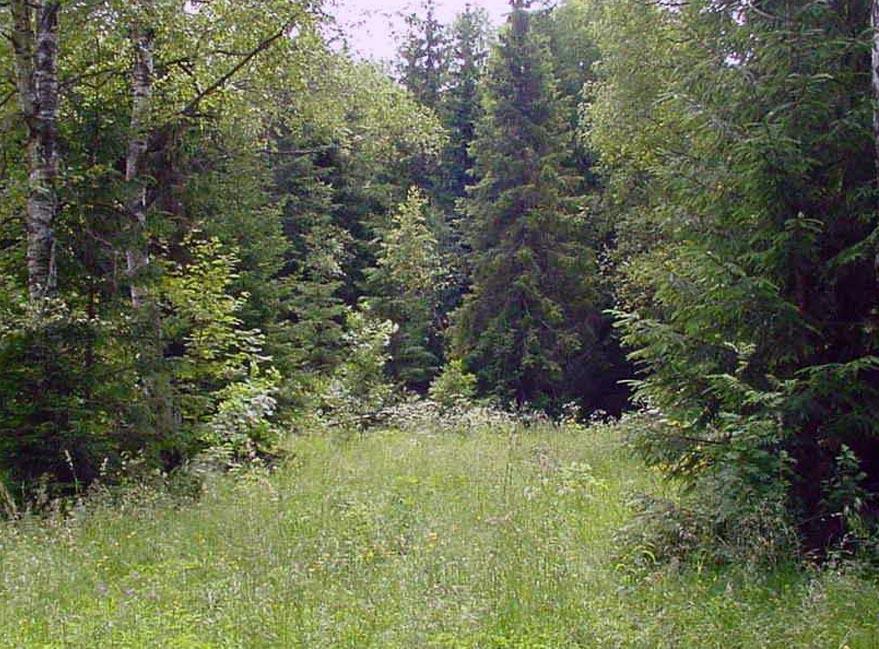 уничтожение леса в берендеевом царстве случайно